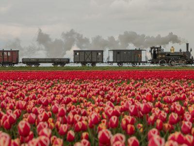Bello door de tulpenvelden Foto Gerda Holla - naamsvermelding verplicht vrij van rechten